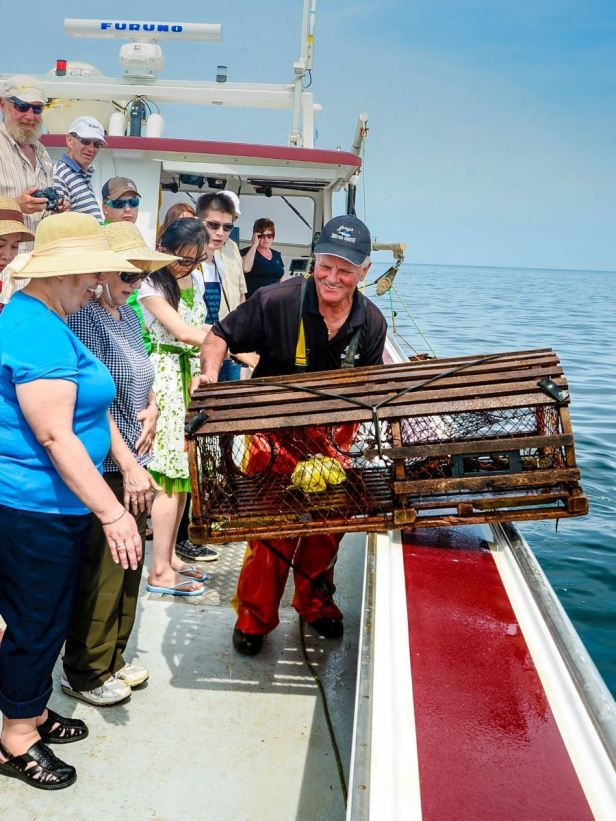 Lobster tours with Joeys Deep Sea Fishing